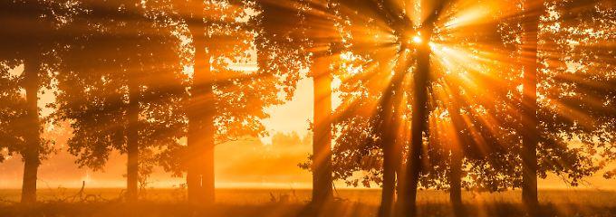 Dabei ist es doch so schön im Osten, wie etwa in Brandenburg, wo dieses Bild entstand.