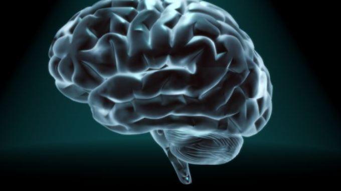 Den Forschern standen für die Studie Daten des Humanen Konnektom-Projektes (HCP) zur Verfügung.