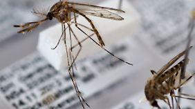 Einwandernde Insekten: Bringen Mücken exotische Krankheiten nach Deutschland?