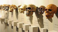 Mollig, schlau oder blau?: Wo die Evolution den Menschen hinführt