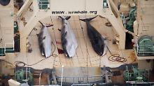 Japan widersetzt sich IWC: Walfangflotte kehrt in Antarktis zurück