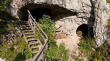"""Frühmenschenkind """"Denisova 11"""": Neandertaler paarten sich mit Denisovanern"""