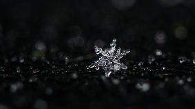 Bei genauer Betrachtung fällt auf, wie filigran ein einzelner Eiskristall ist.