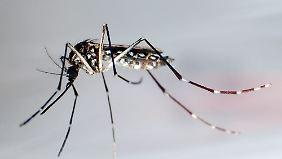 Anfangs verliefen Infektionen mit dem Zika-Virus milde, übertragen werden soll er von Mücken.