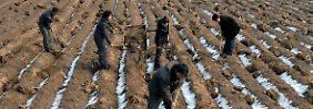 Aus Mangel an Nahrungsmitteln: Nordkorea verordnet Eigeninitiative