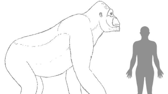Giganthopithecus könnte für King Kong Modell gestanden haben.