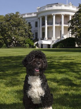 """Entführungsziel: """"Bo"""", der Präsidentenhund"""