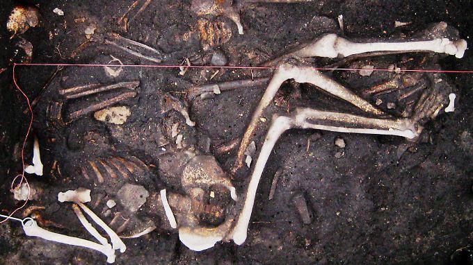 Skelette dreier Soldaten aus dem Dreißigjährigen Krieg (1618-1648), gefunden in Brandenburg.