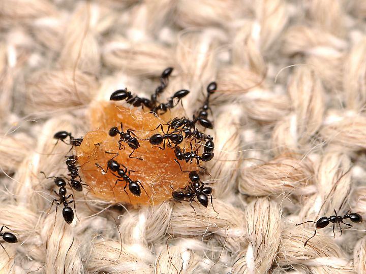 milben spinnen kleidermotten krabbeltiere die auch in wohnungen leben n. Black Bedroom Furniture Sets. Home Design Ideas