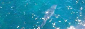 Aufregung am Marino Rocks Beach: Gigantischer Weißer Hai gesichtet