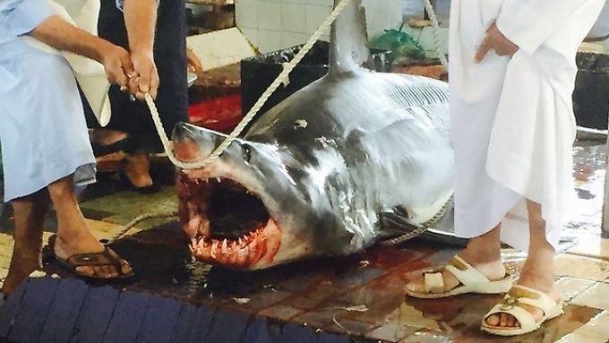 Foto des Angreifers: Der Hai misst vier Meter.