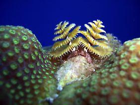 Die Unterwasserwelt von Bayahibe.