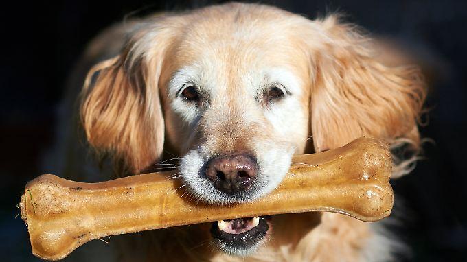 Für seinen Hund würde der Deutsche beinahe alles tun.