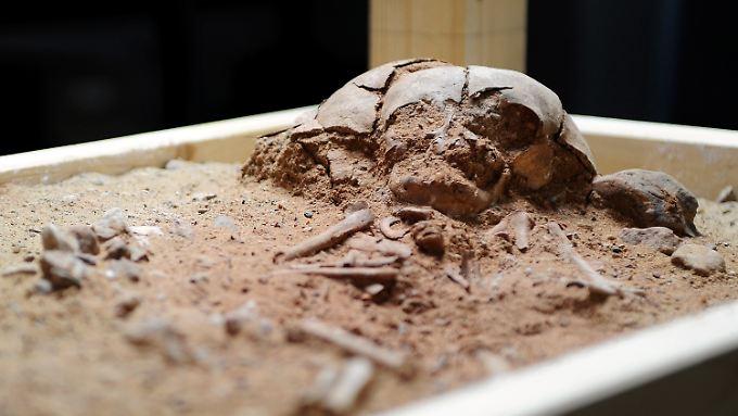 Die Knochen dieses Babys sind die ältesten bekannten ihrer Art in Mitteleuropa.