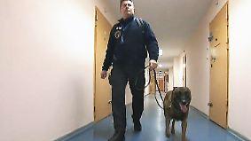 Illegale Mobiltelefone im Gefängnis: Deutschlands erster Handy-Hund macht Häftlingen das Leben schwer