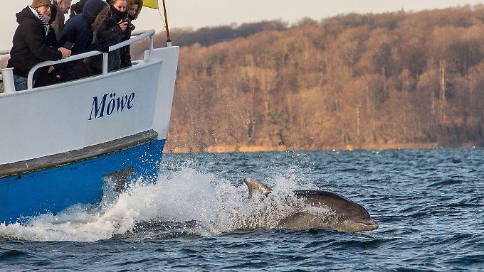 Mensch, Maschine - und Delfin: Auf der Ostsee ist das derzeit möglich.