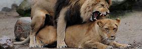Geschlechterrollen im Tierreich: Größe der Keimzellen ist ausschlaggebend