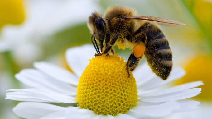 Nicht nur Bienen sind betroffen, auch Motten, Wespen, Käfer, Vögel und Fledermäuse zählen laut IPBES zu den Bestäubern.