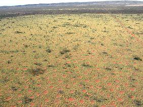 Aus der Vogelperspektive wird ersichtlich, dass sich die Feenkreise homogen über die Landschaft verteilen.