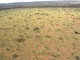 Erstmals außerhalb Afrikas entdeckt: Forscher kommen Feenkreisen auf die Spur