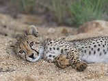 Die Letzten ihrer Art: Auf Safari im Krüger-Nationalpark