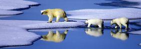 """Bericht enthüllt Zustand der Erde: """"Wir sägen den Ast ab, auf dem wir sitzen"""""""