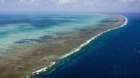 Das Great Barrier Reef erstreckt sich über fast 2500 Kilometer.