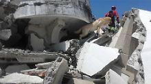 Nach Erdbebeneinsatz in Ecuador: Rettungshund stirbt an Erschöpfung