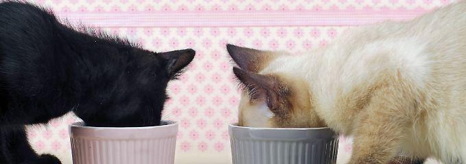 Ein gutes Katzenfutter braucht genug Eiweiß, Fettsäuren, Vitamine und Mineralstoffe.