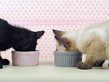 Das Beste für die Mieze: Katzen brauchen kein teures Futter