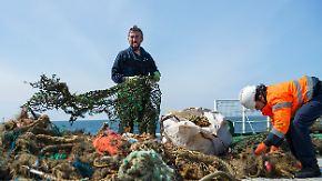 """Todesfallen für Meerestiere: Umweltschützer gehen auf die Suche nach """"Geisternetzen"""""""