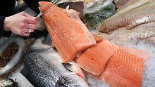 """So """"sicher"""" wie echter Fisch: Kanada lässt Gen-Lachs zu"""