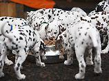 Mit und ohne Getreide: Das beste Trockenfutter für den Hund