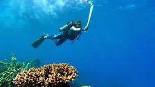 Korallenbleiche breitet sich aus: Das Great Barrier Reef stirbt