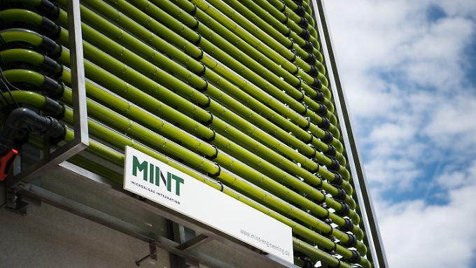 Mikroalgenanlage an einer Hauswand in Berlin.