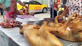 Umstrittenes Fest in Yulin: Chinesen verspeisen Tausende Hunde