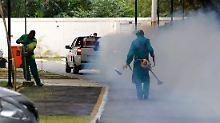 Vier Infizierte in Florida: Zika-Mücke erreicht USA