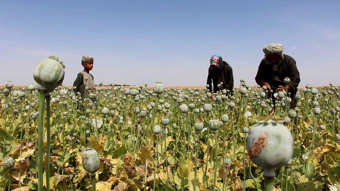 Geschätzte 9000 Tonnen Opium wurden laut den UN in diesem Jahr in Afghanistan produziert.