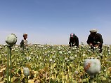 Rekordernte in Afghanistan: USA bombardieren Drogenlabore der Taliban
