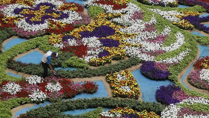 Prachtvoll: Erst kürzlich wurde in Kolumbien das Blumenfestival gefeiert.