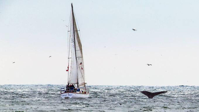 Image result for Eine kurze Marktübersicht zu Segelbooten