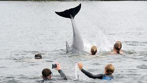 Seltener Besuch in der Kieler Förde: Zutraulicher Delfin bereitet Polizei Sorgen