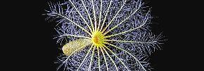 Winzige Naturschönheiten: Farbenspiele der Mikroskop-Fotografie