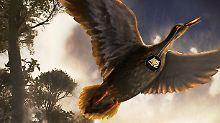 Fundsache, Nr. 1338: Ältester Stimmkopf eines Vogels
