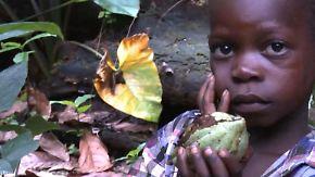 Bittere Ernte an der Elfenbeinküste: Kakaoplantagen vertuschen Kinderarbeit