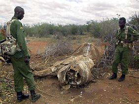 Parkranger untersuchen im Tsavo-Nationalpark in Kenia einen Tatort, an dem Elefanten von Wilderern wegen ihrer Stoßzähne abgeschlachtet wurden. (Archivbild)