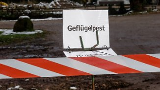 Vogelgrippe breitet sich aus: Minister erwägt bundesweite Stallpflicht