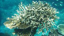 """Ein hoffnungsloser Fall?: """"Das Great Barrier Reef ist 2016 gestorben"""""""