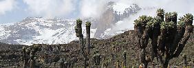 Die Vielfalt an Pflanzen und Tieren nimmt mit sinkender Temperatur ab. Das Foto entstand am Kilimandscharo auf einer Höhe von etwa 3.800 Metern.