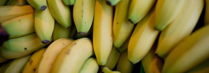 Naht das Leben ohne Bananen?